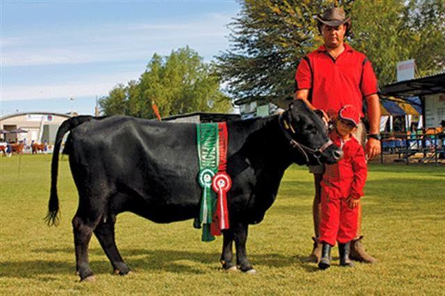 jenis sapi yang bagus untuk ternak